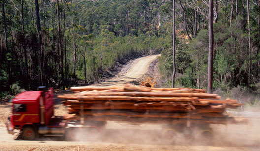 campaign page image forestry email your mp