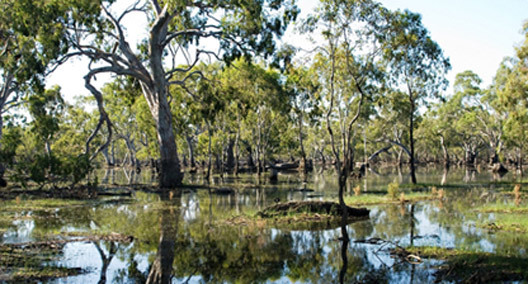 save the murray darling basin The rollout of the plan that is meant to save the murray darling basin is failing without an urgent refocus and effort to secure environmental water, the river will die a full- independent audit of the plan is urgently needed, senator hanson-young said.
